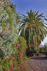 El-Palmeral-Garten_01
