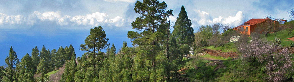La Pelada - alojamiento con internet en Las Tricias | La Palma Travel
