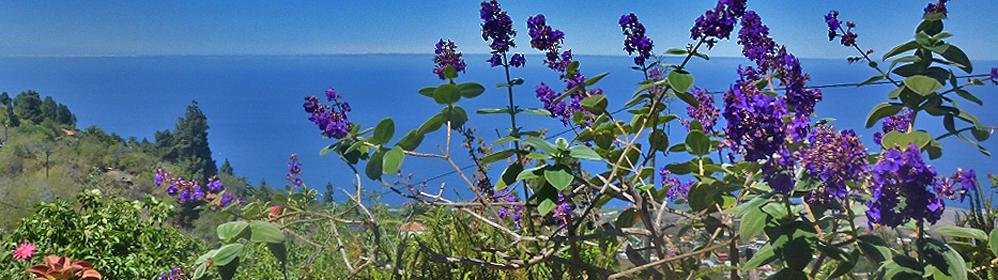 Vollkornbäckerei La Punta - Tijarafe - La Palma