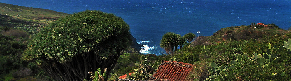 Vacation houses and apartments - Las Tricias - La Palma