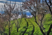 las-tricias-landschaft