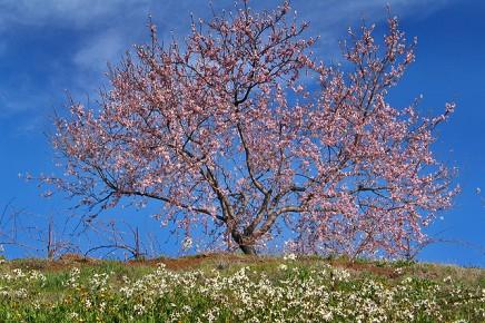 mandelbaum-lastricias