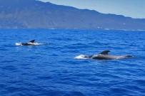 puerto-de-tazacorte-delfine