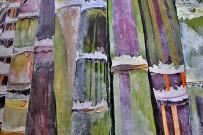 agromercado-brena-alta-zuckerrohr