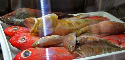 kiosco-teneguia-restaurante-puerto-de-tazacorte-la-palma-pescado