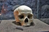 mab-los-llanos-museo-arqueologico-guanchen-awaritas-calavera