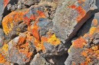 mazo-montana-de-azufre-liquenes