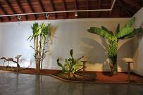 museo-del-puro-palmero-zigarren-monokulturen