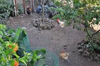tasca-catalina-restaurante-tapas-el-paso-la-palma-gallinas