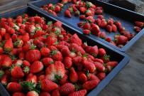 el-duende-del-fuego-erdbeeren