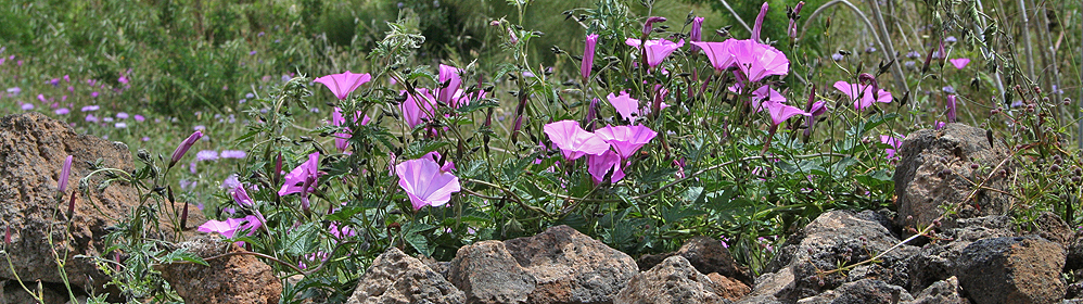 The Flora on the Canary Island La Palma - La Palma Travel