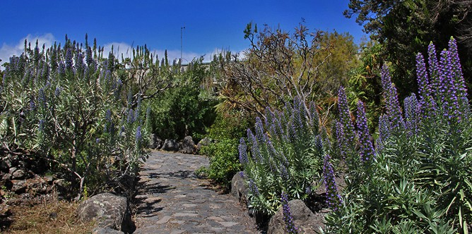 centro-de-visitantes-caldera-de-taburiente-el-paso-la-palma-jardin-botanico-garten-camino