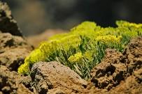 roque-de-los-muchachos-vegetation