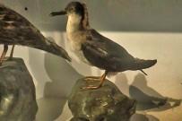 museo-insular-la-palma-gaviota