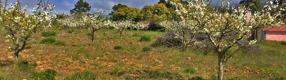 Frühlingsblüten - La Palma Travel
