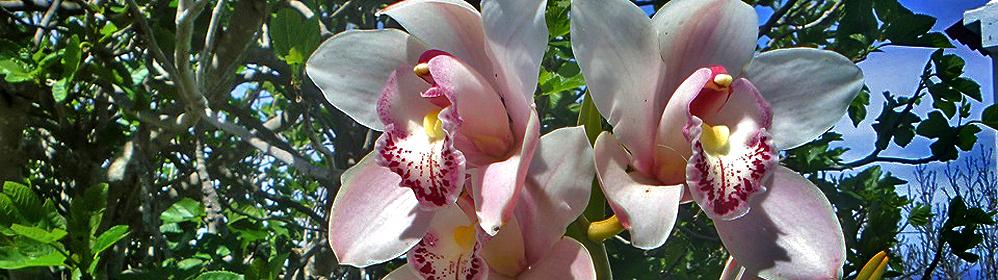 Orchideen im Garten - La Palma Travel