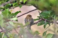 kanarienvogel-canario-pajaro-kanaren-girlitz-serinus-canaria-