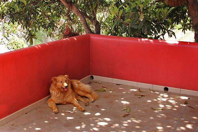 bodega-el-nispero-la-palma-garafiano-perro-hund-rasse