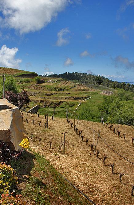 bodega-el-nispero-la-palma-landschaft-wein-bejeque