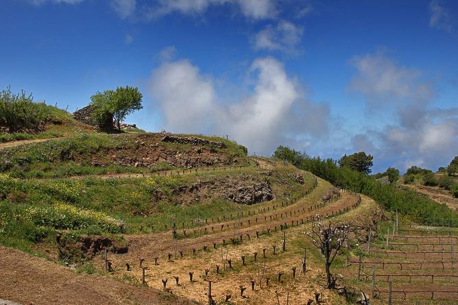 bodega-el-nispero-la-palma-pajero-paisaje