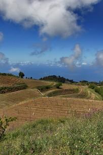 bodega-el-nispero-la-palma-vinyard