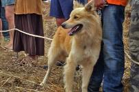 san-antonio-del-monta-garafia-la-palma-garafiano-raza-huete-hund