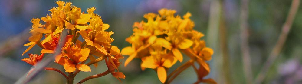 Die Erdorchidee - La Palma Travel