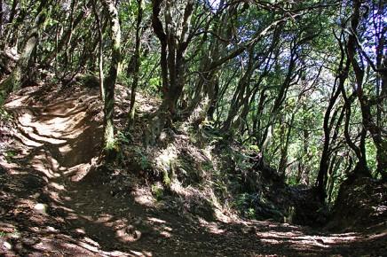 refugio-pared-vieja-wandern-la-palma-schattiger-weg