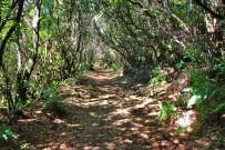 refugio-pared-vieja-wandern-la-palma-schattiger-weg2