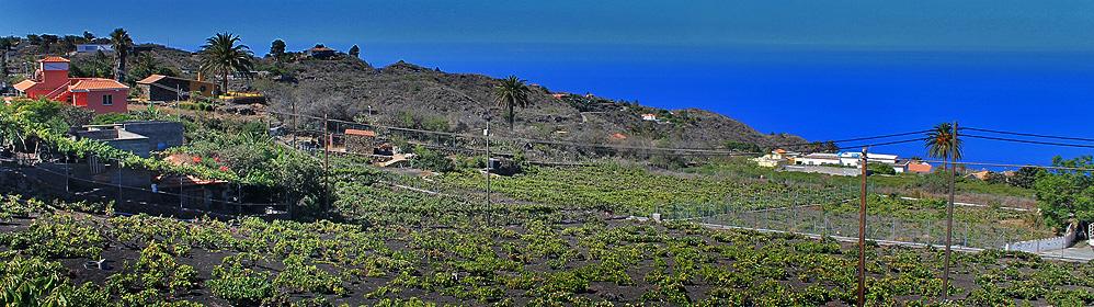 Lavafluss und Weinfelder <br>– Rundweg durch die Kulturlandschaft von Las Manchas - La Palma Travel