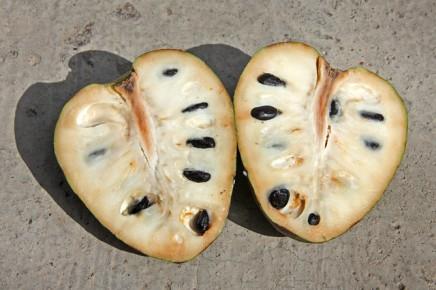 cherimoya-annona-cherimola-anone-rahmapfel-la-palma-fruchtfleisch-kerne-