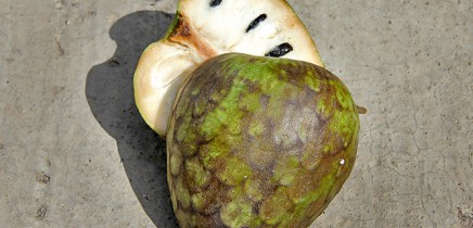 cherimoya-annona-cherimola-anone-rahmapfel-la-palma-obst