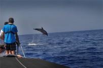 Bussard-puerto-de-tazacorte-boots-ausfluege-delfin