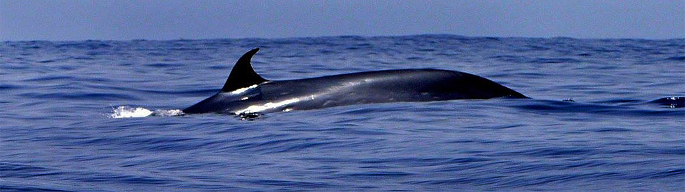 Ocean Explorer - Bussard & Inia - La Palma Travel