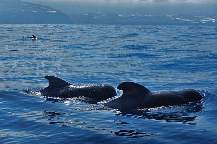 Bussard-puerto-de-tazacorte-boots-ausfluege-wale-delfine-3