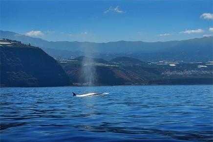 Bussard-puerto-de-tazacorte-boots-ausfluege-wale-delfine-4