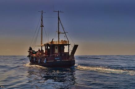 Bussard-puerto-de-tazacorte-boots-ausfluege-wale-delfine