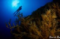 casa-de-buceo-unterwasser-arco-de-man-19