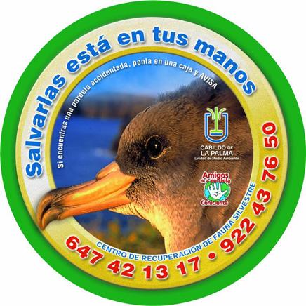 gelbschnabelsturmtaucher-pardela-cenicienta-calonectris-diomedea-recuperacion-fauna-silvestre-la-palma