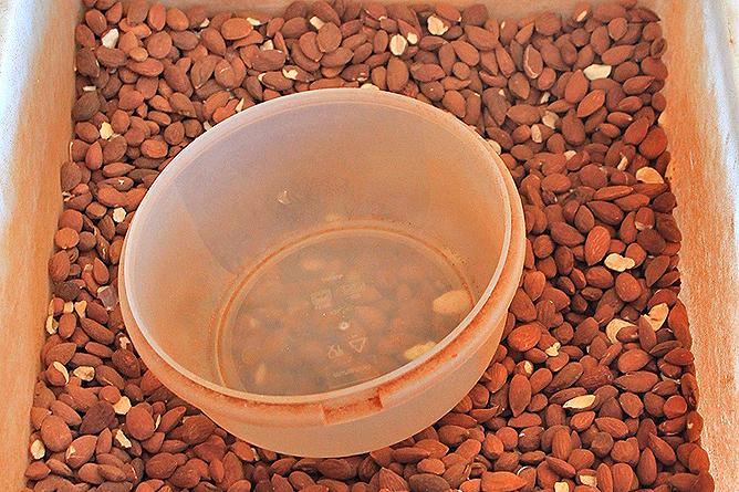 mandelmus-crema-de-almendras-mandeln-almendras