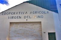 mandeln-almendras-prunus-dulcis-cooperativa-virgen-del-pino-puntagorda-kooperative
