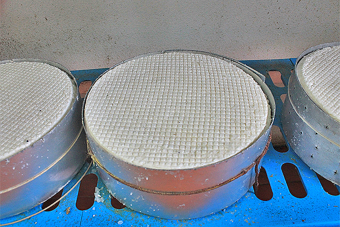 luna-de-awara-garafia-queso-fresco-ziegen-kaese-la-palma-rohmilch