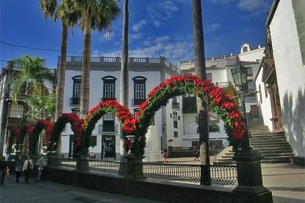 flor-de-pascua-weihnachtsstern-euphorbia-pulcherrima-plaza-espana-santa-cruz-de-la-palma
