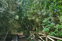 brezo-baumheide-erica-arborea-fayal-brezal
