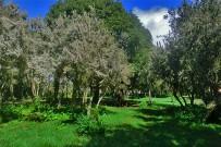 brezo-baumheide-erica-arborea-la-laguna-barlovento