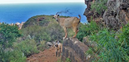 molinos-de-bellido-wassermuehlen-cabras-la-palma-wanderung
