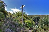 wanderung-sendero-dragos-salvatierra-garafia-la-palma-42b-wanderweg