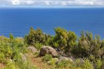 wanderung-sendero-dragos-salvatierra-garafia-la-palma-54-wanderweg-brezo