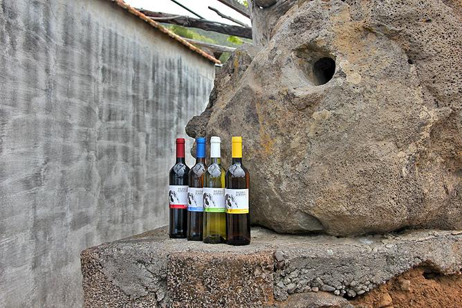 bodegas-perdomo-piedra-jurada-vino-la-palma-briestas-stein2