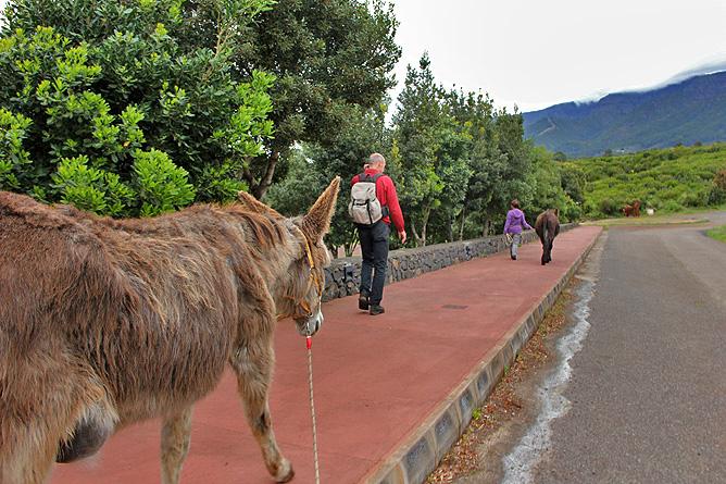 esel-wandern-burros-de-la-luz-la-palma-garafia-04